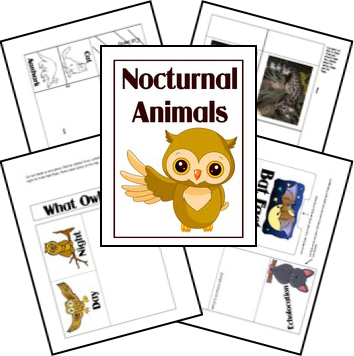 nocturnal_animals_complete