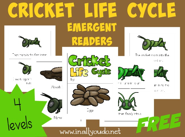 Kids will enjoy learning about the Cricket Life Cycle with these fun and leveled readers!! {4 levels} :: www.blessedbeyondadoubt.com