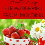 The Secret to Keeping your Strawberries from Molding!