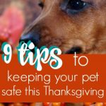 How to Keep Your Pet Safe During Thanksgiving