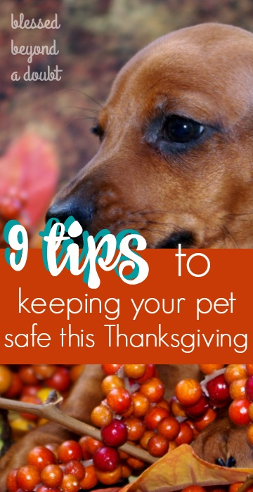 how-to-keep-your-pet-safe-during-thanksgiving_blog1
