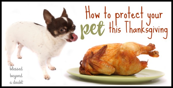 how-to-protect-your-pet-this-thanksgiving_blog2