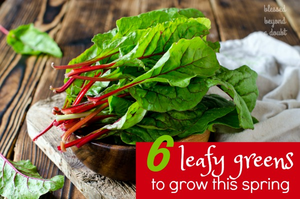 Here are 6 Leafy Greens that should grow in the spring. I have fallen in love with #2.