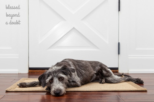 There really isn't much to wood floor maintenance. You just need to learn the tricks and tips to keeping your hardwood floors looking beautiful.