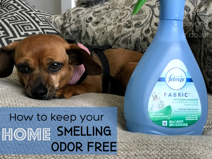 Tired of pet odor? We found the Simple Pet Odor Removal Tip!