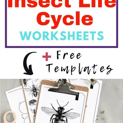 Free Insect Life Cycle Worksheets