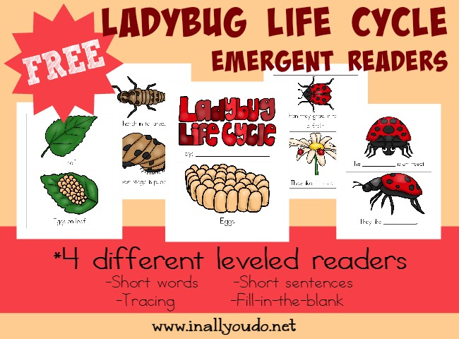 Kids will enjoy learning about the Ladybug Life Cycle with these fun and leveled readers!! {4 levels} :: www.blessedbeyondadoubt.com